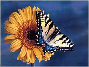counseling-services-butterfly